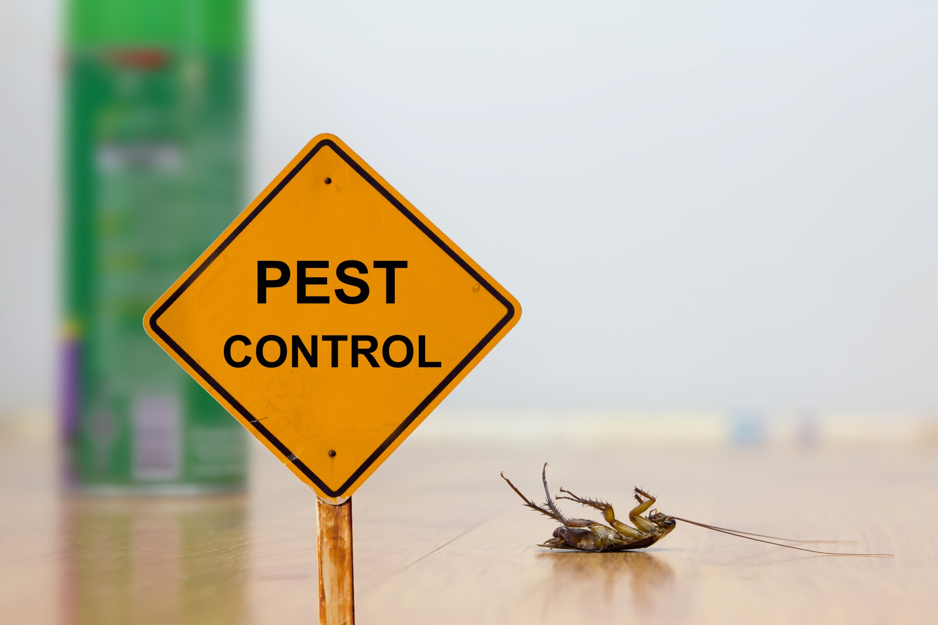 24 Hour Pest Control, Pest Control in London. Call Now 020 3519 0469